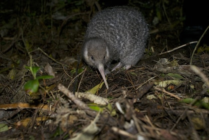 After-Dark Zealandia Wildlife Sanctuary Tour