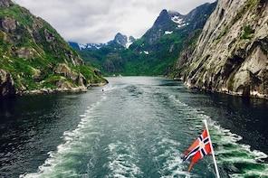 Trollfjord & Wildlife Cruise