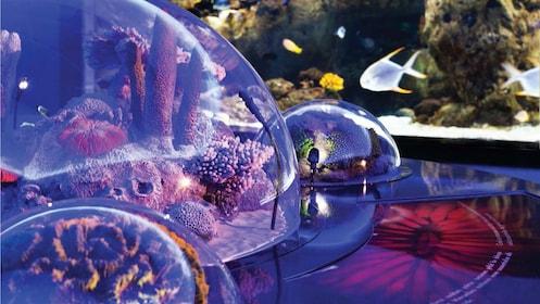 Close view of the displays at the Istanbul Aquarium in Istanbul