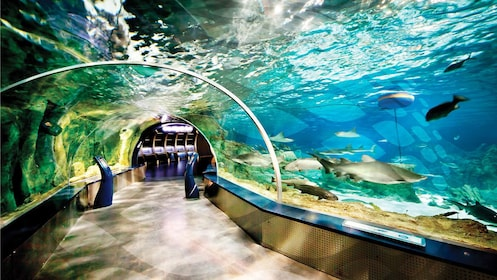 Stunning view of the fish inside the Istanbul Aquarium in Istanbul