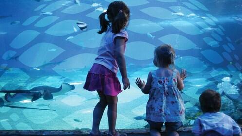 Kids at the Istanbul Aquarium in Istanbul