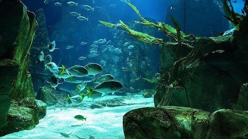 Fish at the Istanbul Aquarium in Istanbul