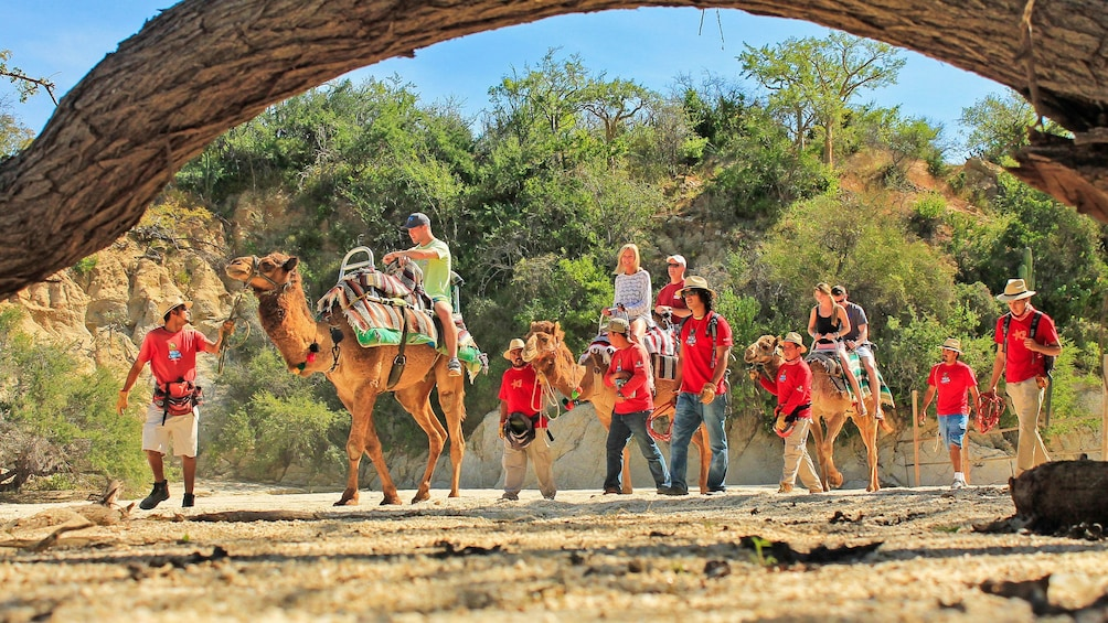 Camel ride with guides in Los Cabos
