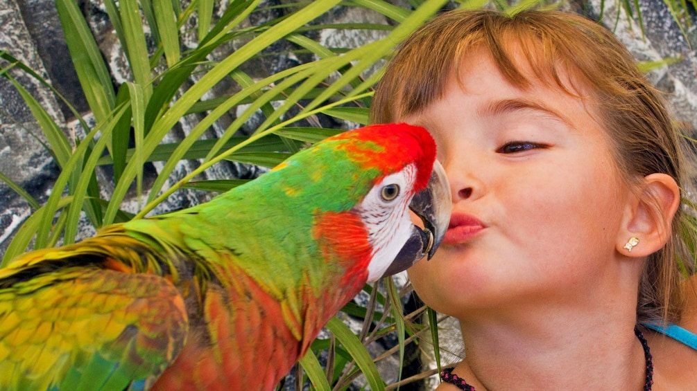 Feeding seeds to parrots in Los Cabos