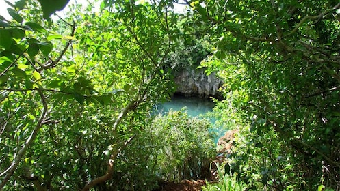 Peeking through the lush trees to a cove below in Bermuda