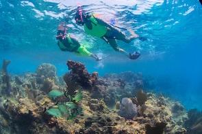 Visite d'une journée à Key West et plongée avec masque et tuba au départ de...