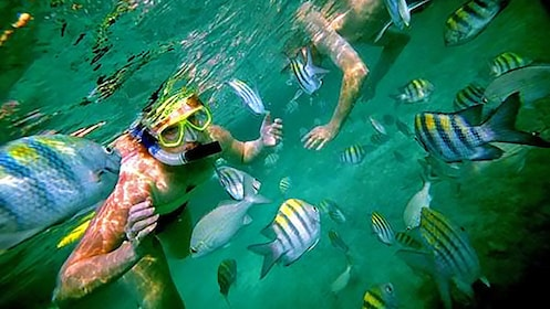 Swimming with tropical fishes in Los Cabos