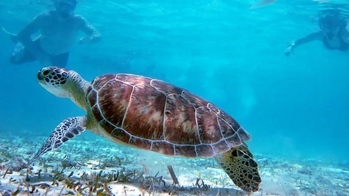 Swimming with wildlife in Los Cabos