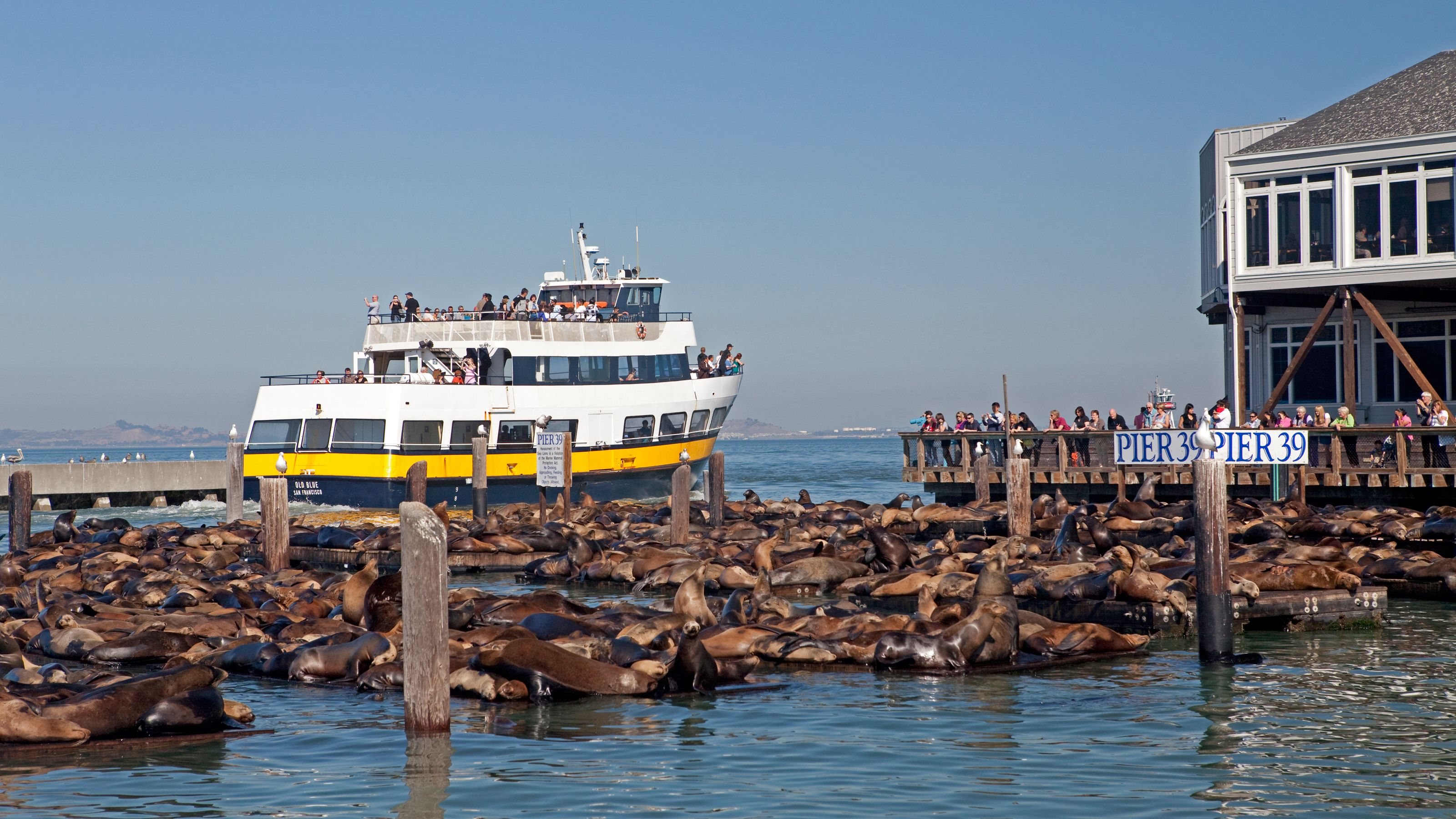 Cruise boat near harbor with seals in san francisco