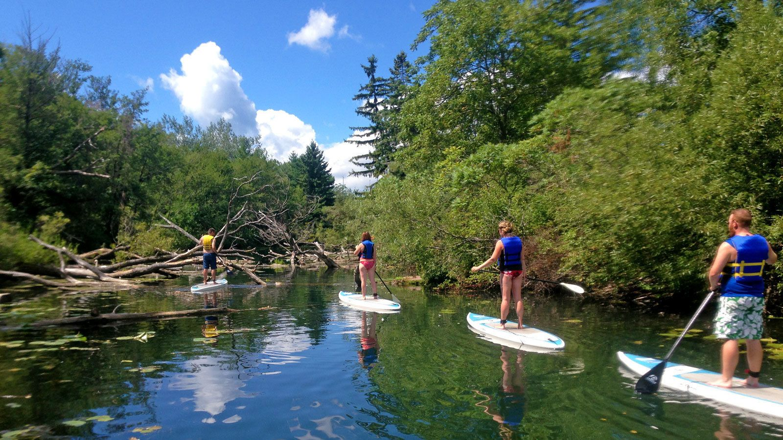 paddleboarders navigating through fallen trees in the water in Toronto