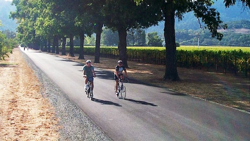 Bicycling pair on a tree-lined road in Carneros