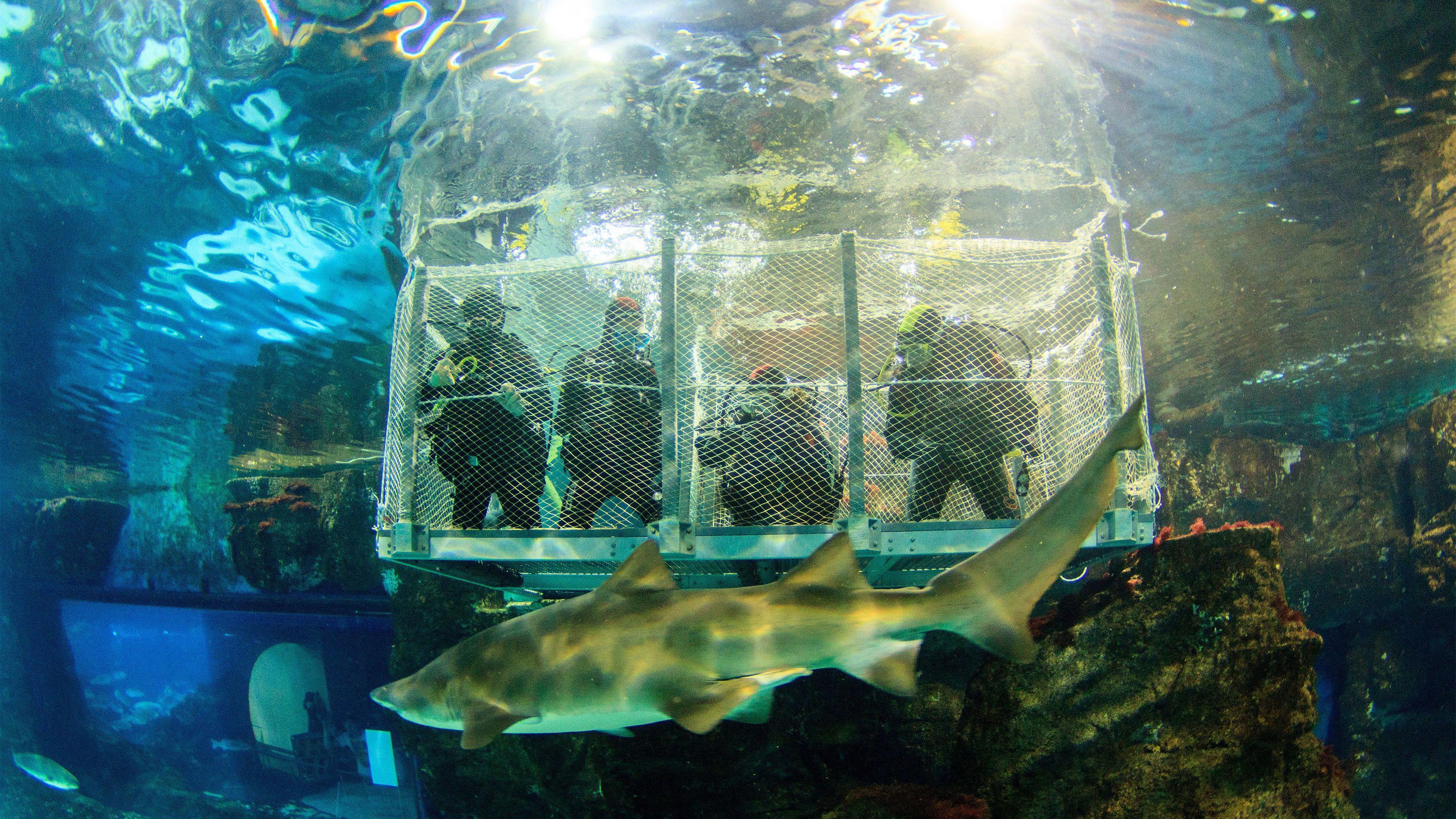 View of a fish at the L'Aquarium Barcelona