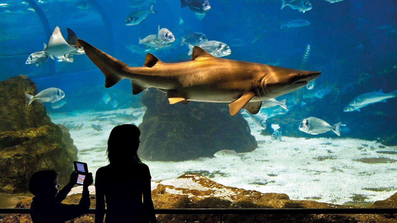 Guests enjoying the L'Aquarium Barcelona