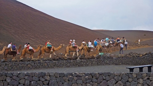 Group riding camels in Lanzarote