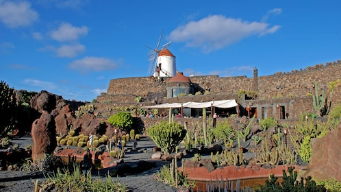 Cactus farm in Lanzarote