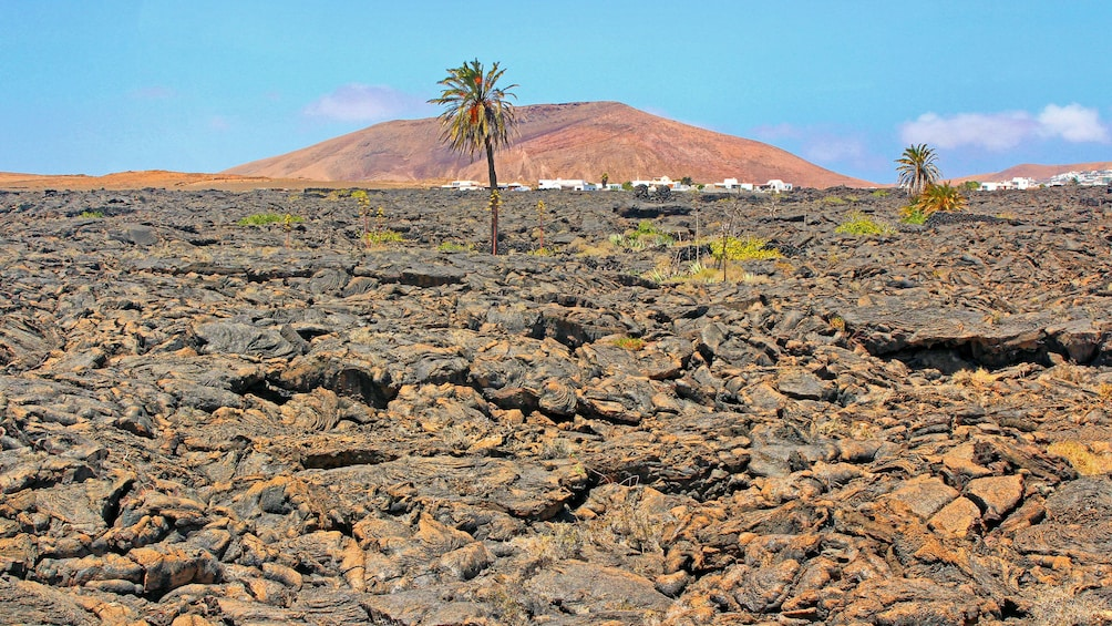 Show item 1 of 10. Hiking on old volcanic rocks in Lanzarote