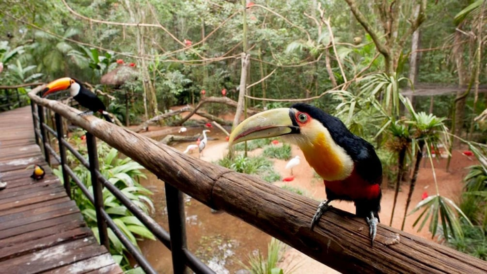 Cargar foto 2 de 9. toucans resting on the wooden rails at the bird park in Maui