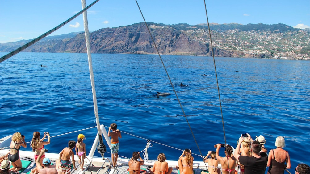 Show item 1 of 5. Group on a catamaran watching dolphins in Madeira Island