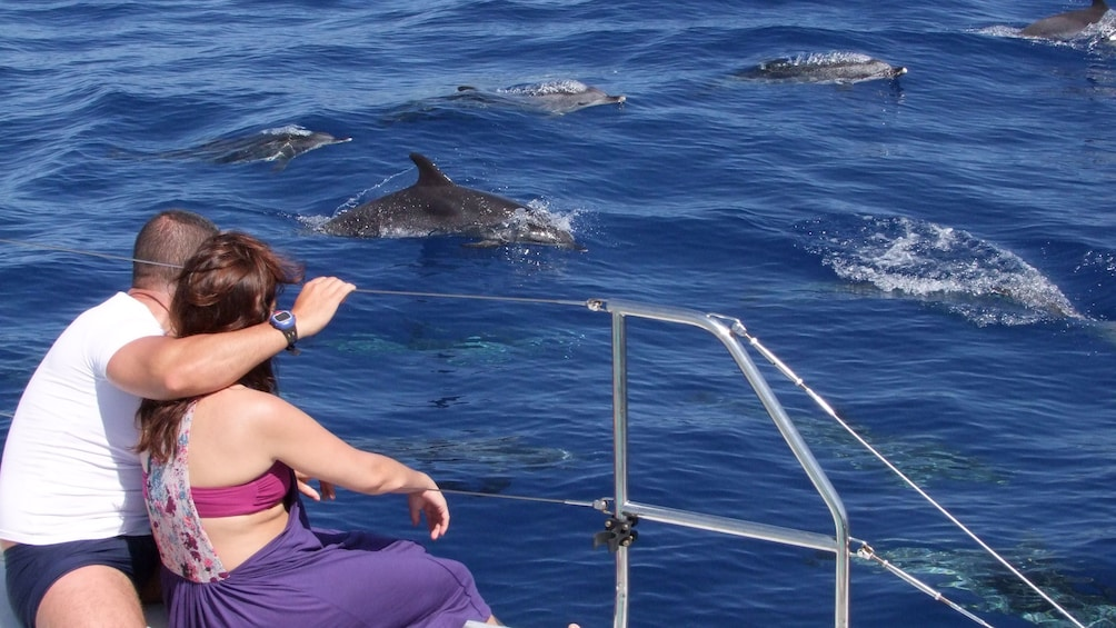 Show item 3 of 5. Couple on a catamaran watching dolphins play nearby in Madeira Island