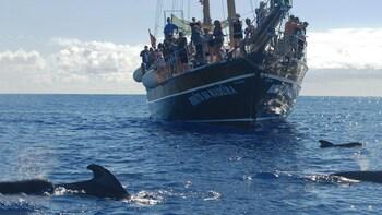 Whales & Dolphins Watch aboard Bonita da Madeira
