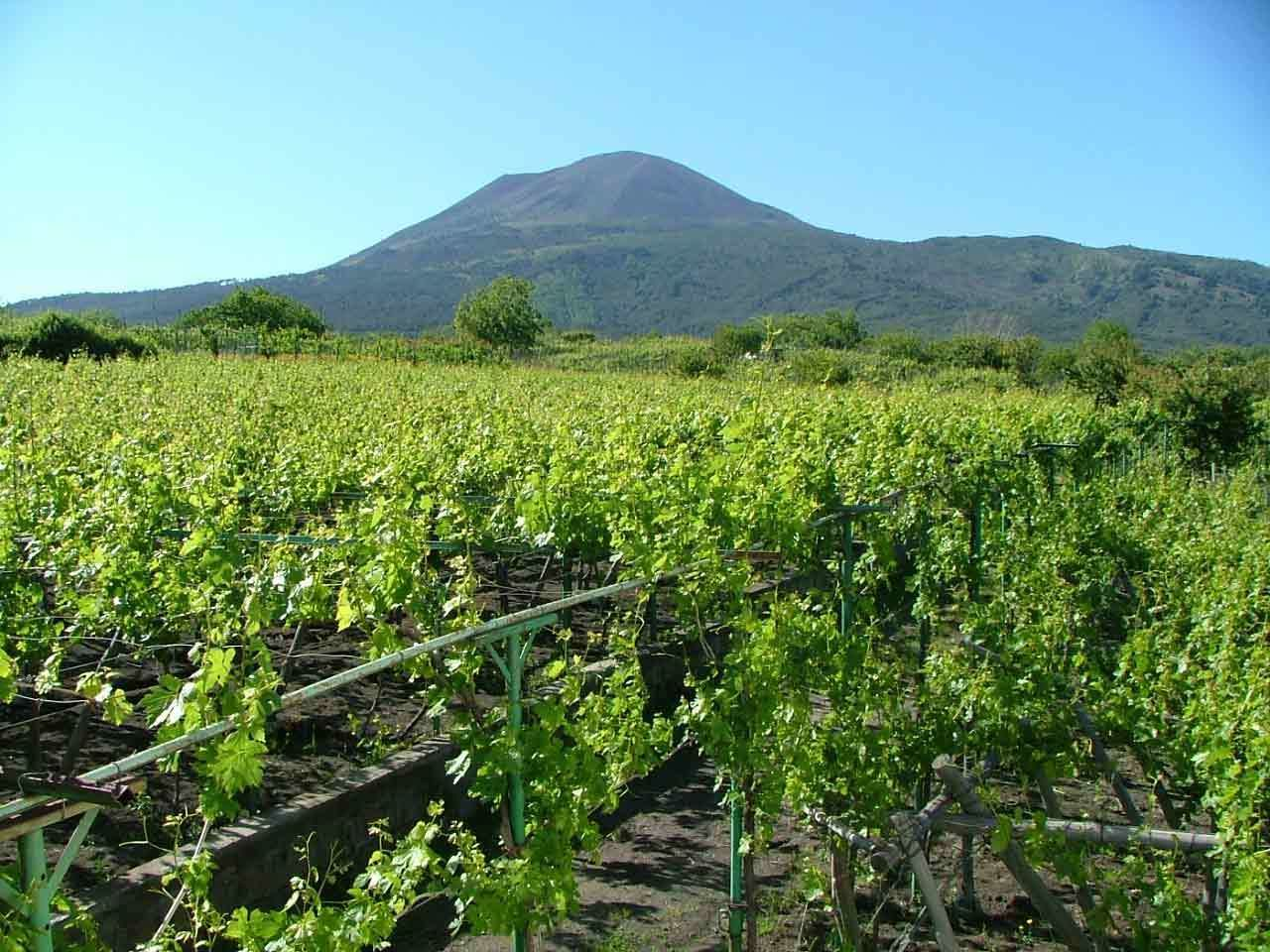 Mount Vesuvius & Vineyard, Lunch & Wine Tasting
