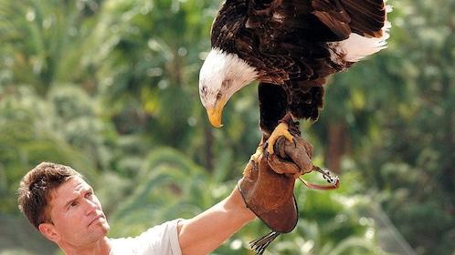 A man with a bald eagle at Palmitos Park in Gran Canaria