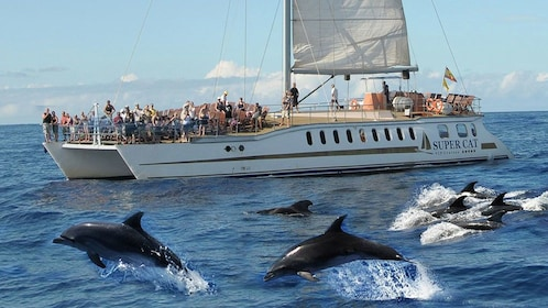 Dolphins swimming beside a Supercat Boat in Gran Canaria