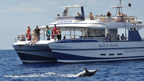 People dolphin watching on a boat in Gran Canaria
