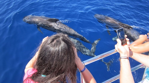 People snapping photos of dolphins from a boat in Gran Canaria