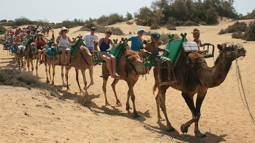 People on camels in Gran Canaria