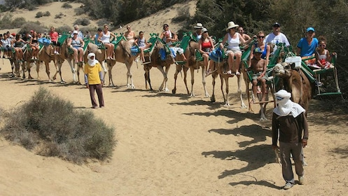 A group of people on camels in Gran Canaria