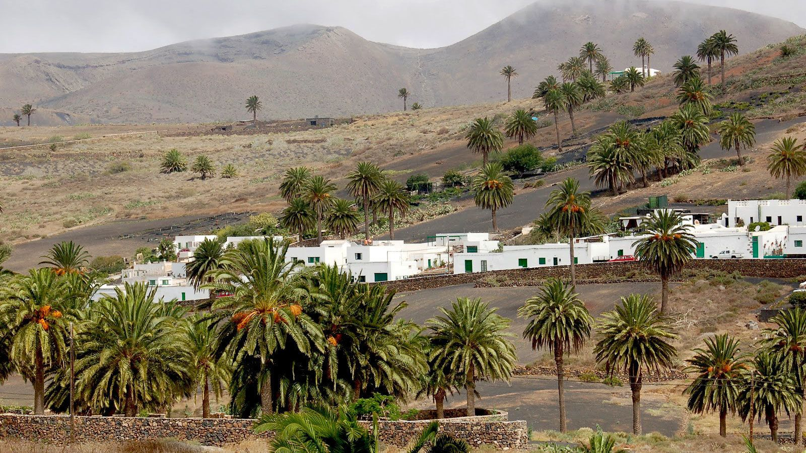 White-washed buildings and palm trees in Gran Canaria