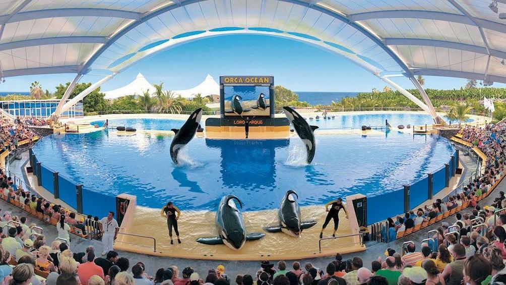 Indlæs billede 1 af 5. Loro Park orca show in Gran Canaria