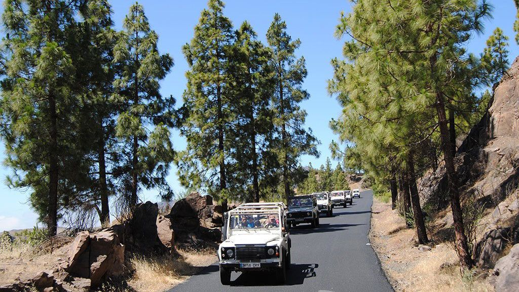 Jeeps on a tree-lined road in Gran Canaria