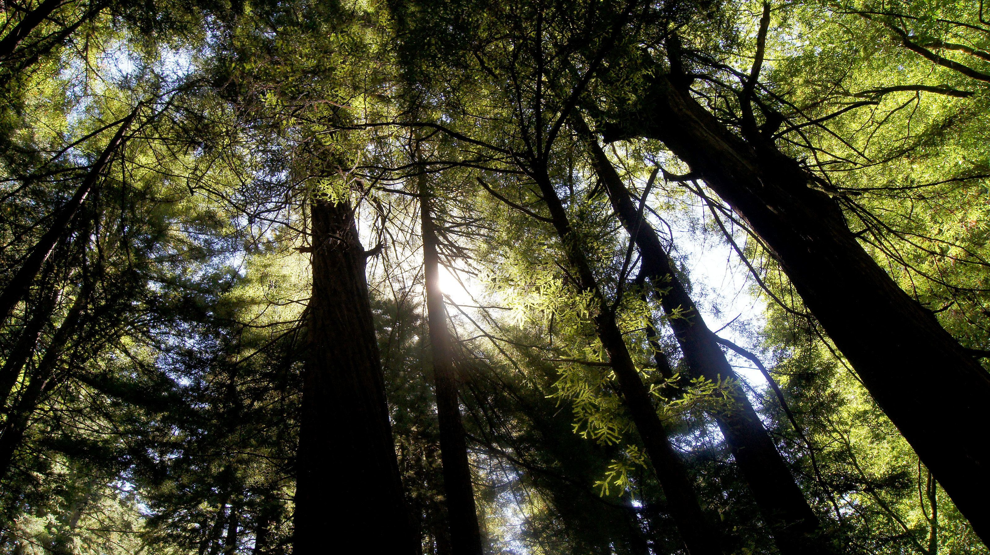 walking through the wooded forest at Muir Woods in San Francisco