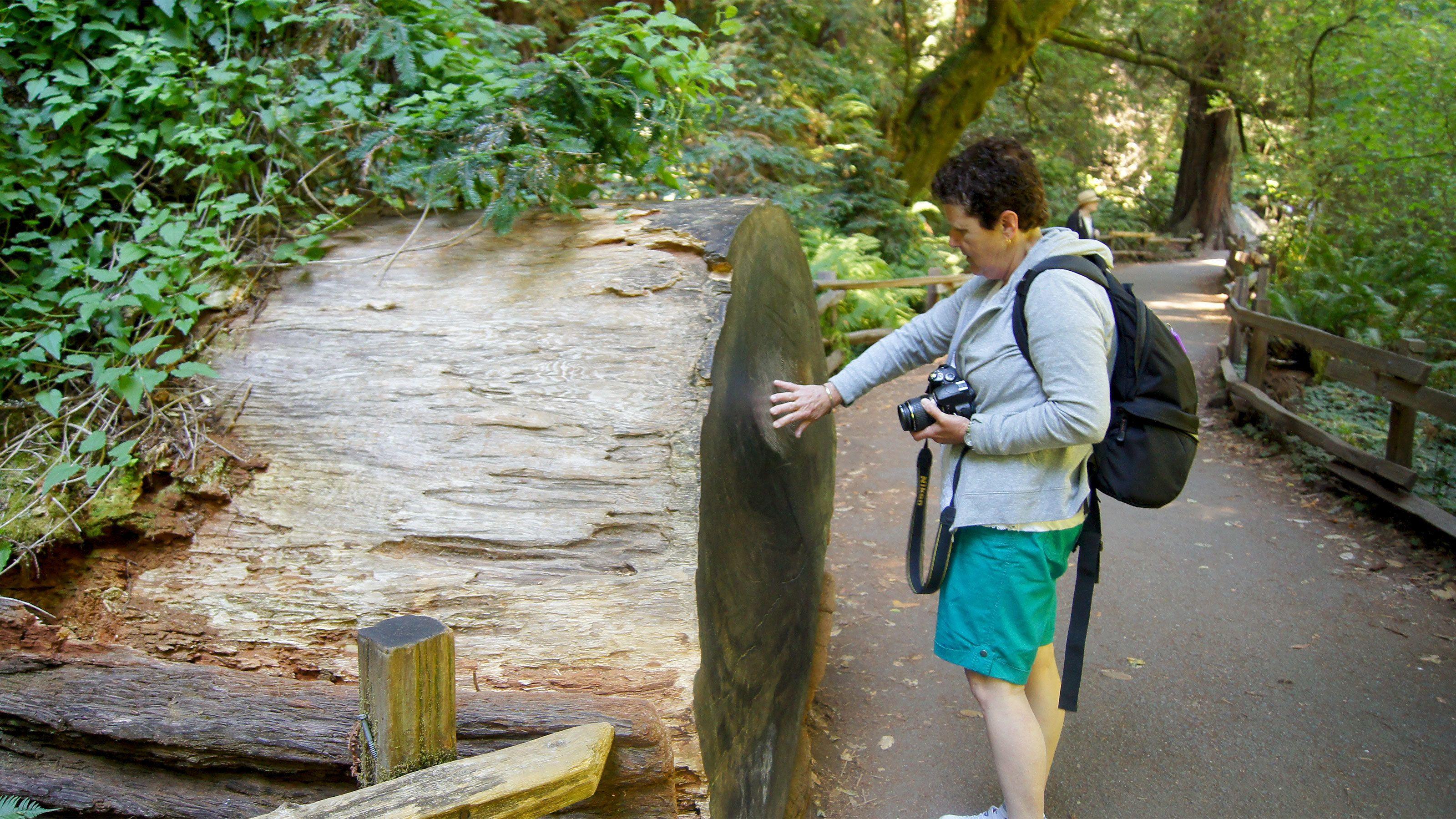 woman examining an old fallen tree in San Francisco