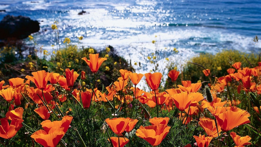 Show item 1 of 5. wild flowers flourishing near the beach in San Francisco