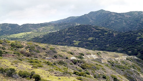 the green and mountainous landscape on Catalina Island