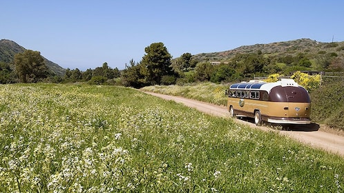 vintage looking bus driving along a field of wild flowers on Catalina Island