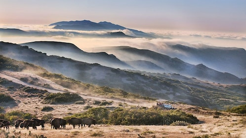 low hanging clouds covering the untamed landscape on Catalina Island