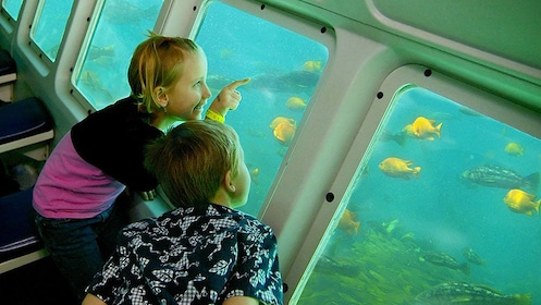 children pointing at fishes from the windows of a submerged compartment at Catalina Island