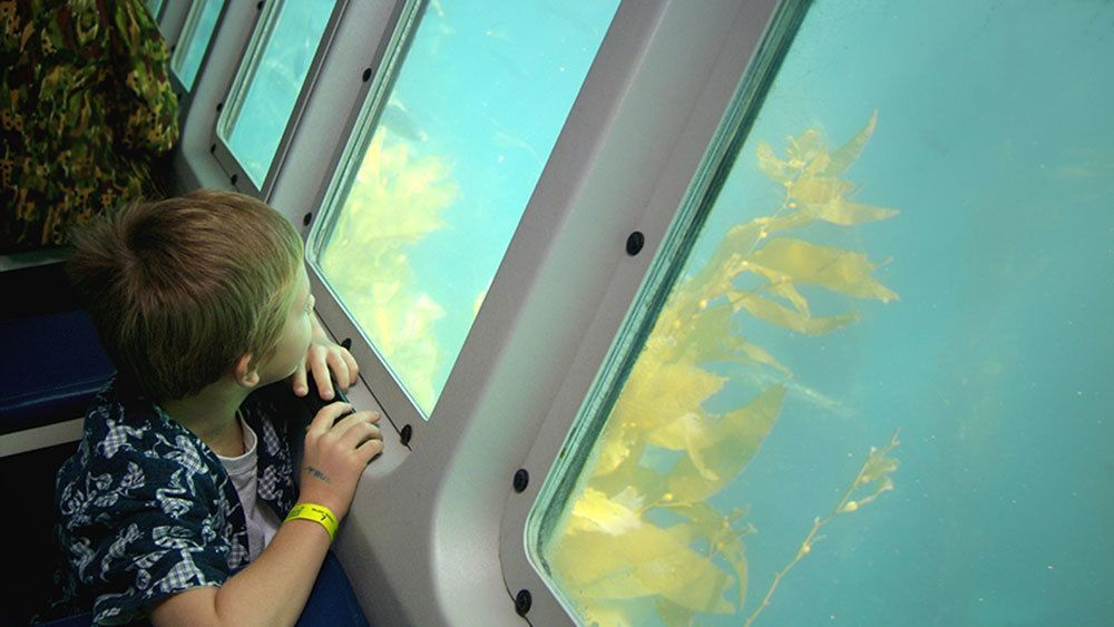 child focused on the window view of a submerged compartment at Catalina Island