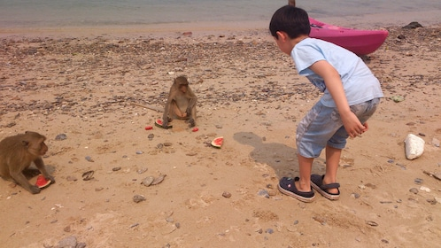 Young boy playing with a couple of monkeys at Khao Sam Roi Yot National Park in Thailand
