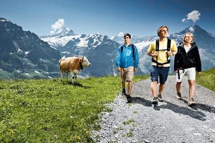 Grindelwald & Interlaken Day Trip from Zurich