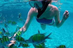 Langkawi Marine Park - Snorkeling by Beach