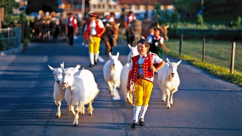 Young boy in traditional costume herding goats down the street in Zurich
