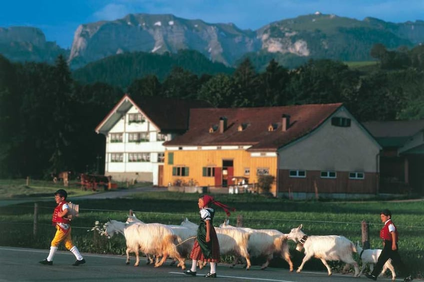 Foto 3 von 8 laden Small-Group Mountains, Cheese & Chocolate Tour