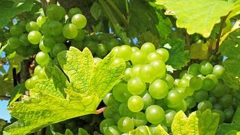 Cinque Terre Wine Tasting Tour