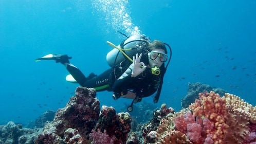 A scuba diver swimming past coral in Antalya