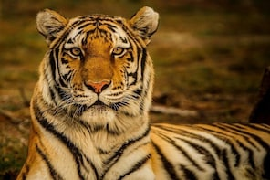 5 Day - Bangladesh Nature & Culture Tour